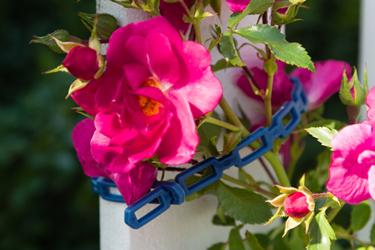 Biologisch abbaubare Kunststoffe werden vielfach in Gartenbau und Landwirtschaft eingesetzt. Bild: ecoplus